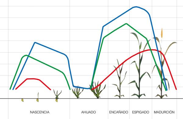 Curva de absorción de nutrientes de los cereales | Agronews Castilla ...