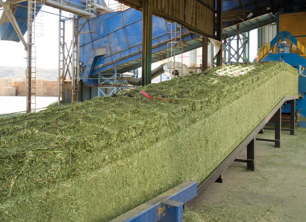 Ventajas del uso de alfalfa deshidratada en alimentación animal
