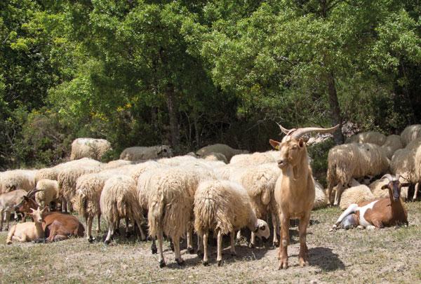 Seguros ganaderos y ayudas