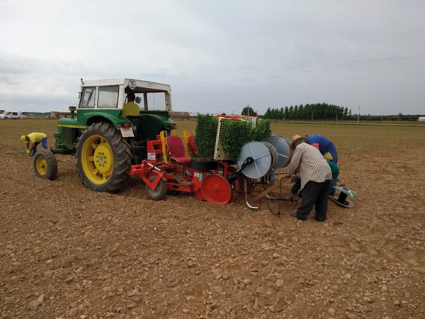 El cultivo del pimiento